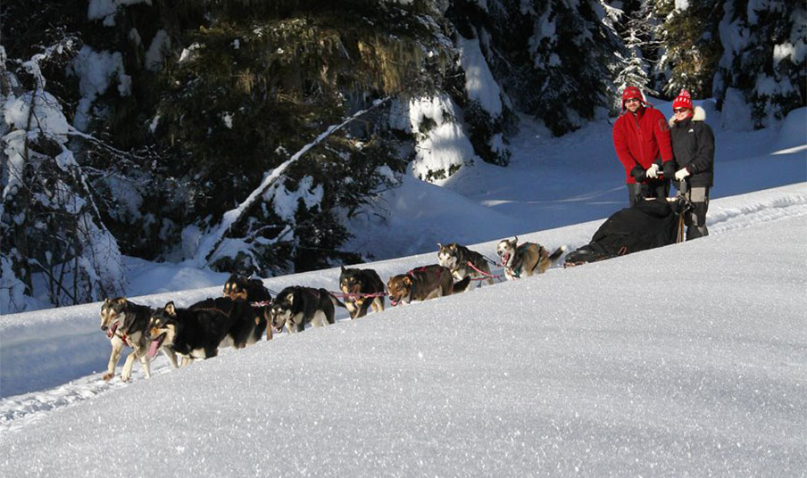 Dogsledding Team & Musher
